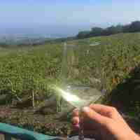 etna wine tour book