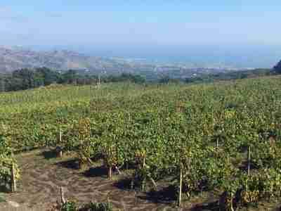etna vino tour