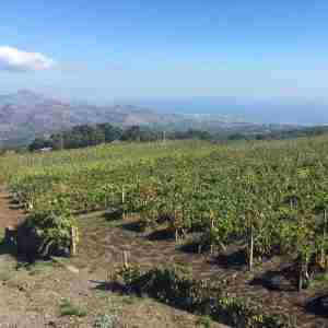 etna wine tour 2020