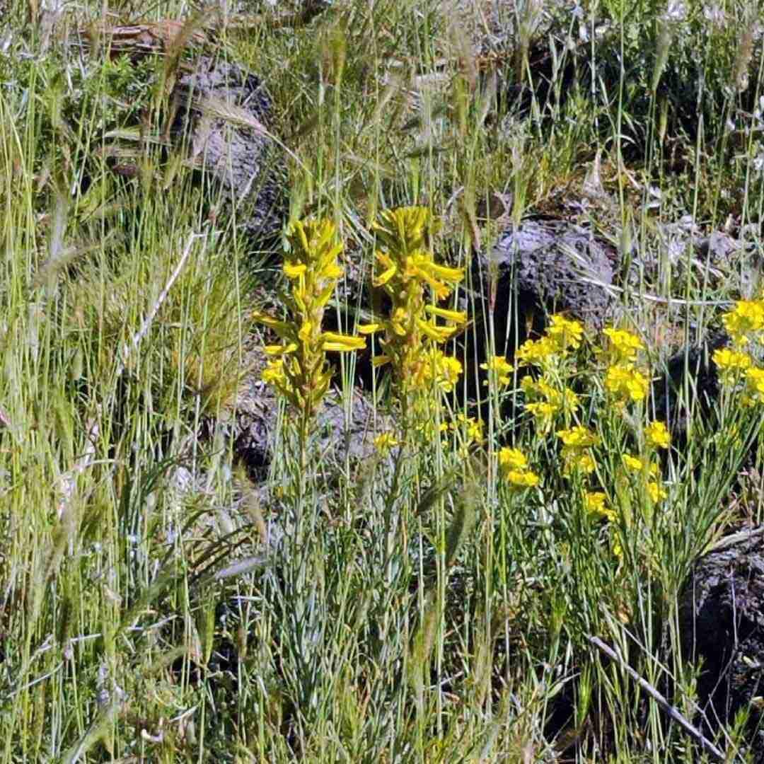 vegetazione etna